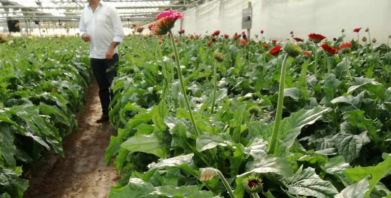 reducir contaminacion electromagnética cultivo Flores Maresme