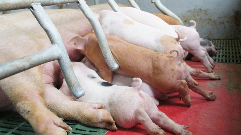 Evitar Contaminacio Electromagnetica Albesa 10 VEEMA Animal System