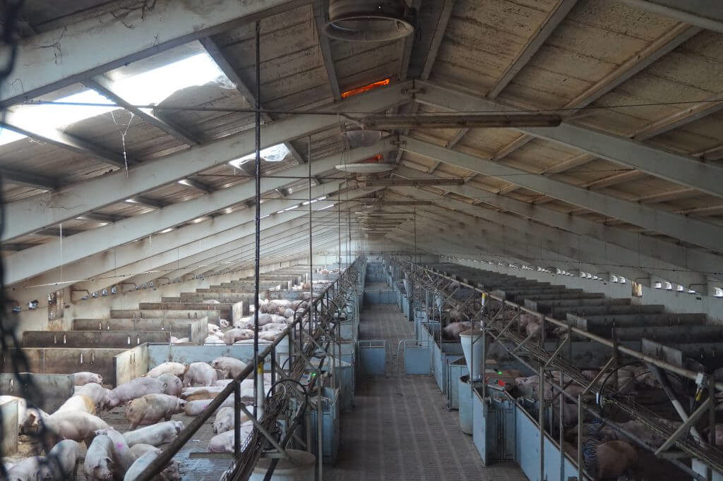 Evitar Contaminacio Electromagnetica Albesa 3 VEEMA Animal System