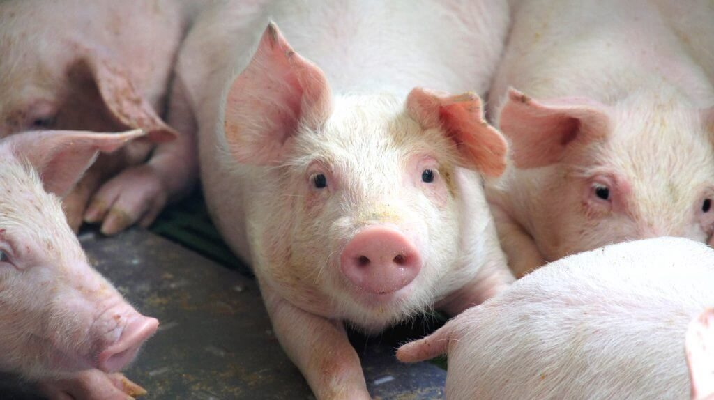 Reducir Contaminacion Electromagnetica Albesa granja VEEMA Animal System