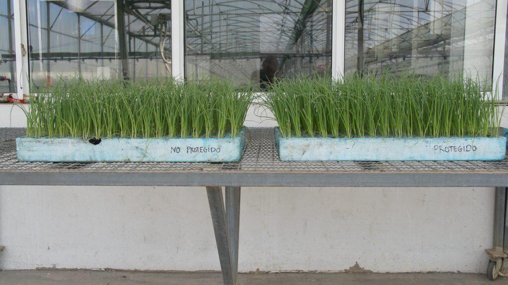 eliminar contaminacion electromagnetica plantaciones