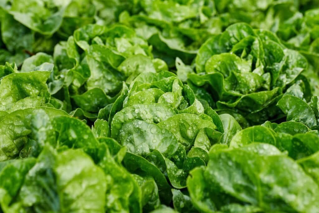 reducir contaminacion electromagnética huerto VEEMA Vegetal System