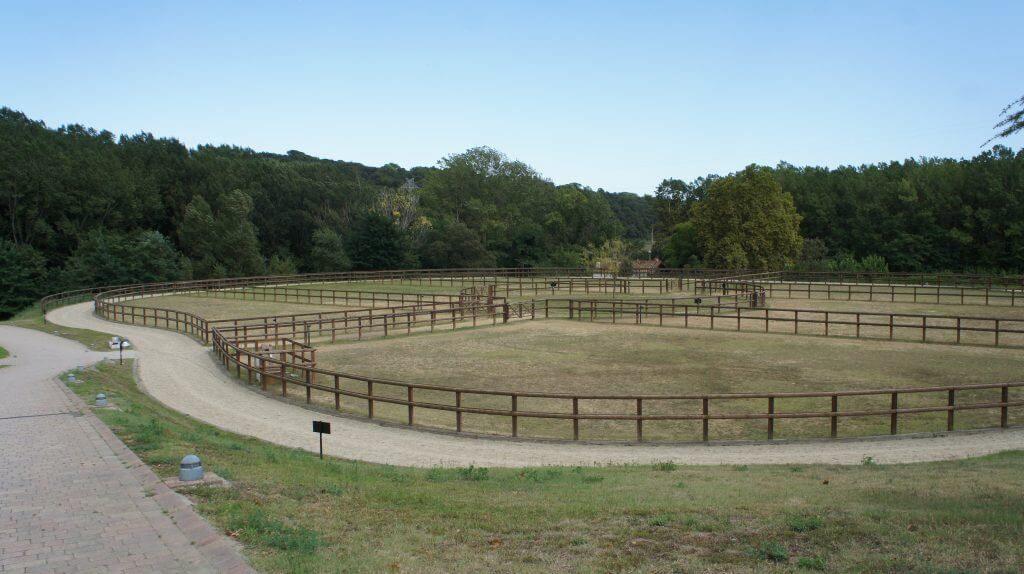 reducir contaminacion electromagnética animales Villa Equus