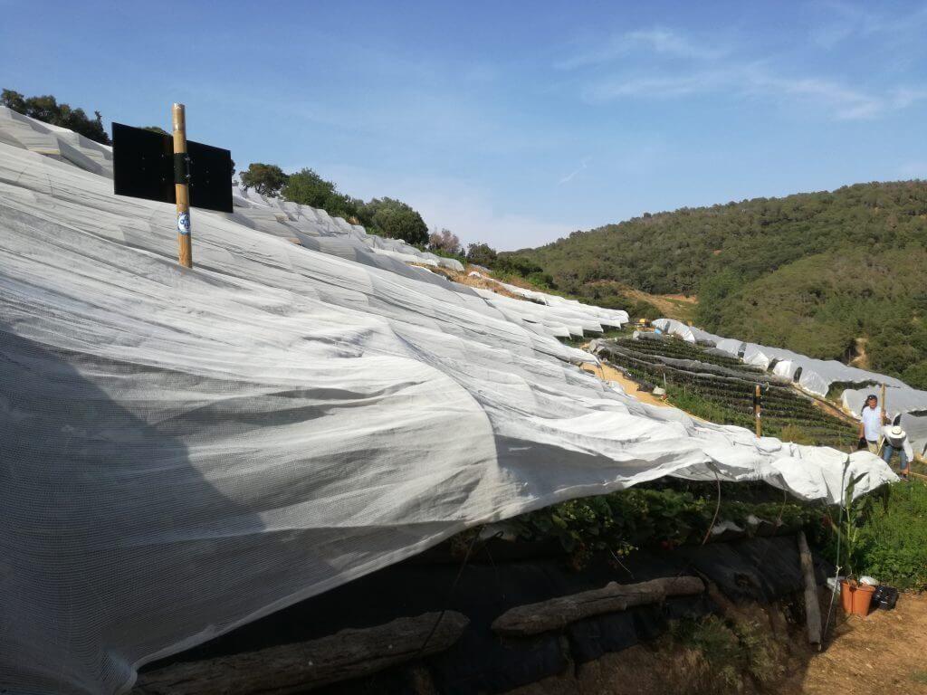 fresas campo natura VEEMA reducir contaminación electromagnetica
