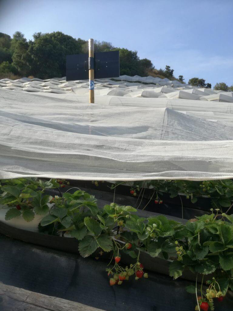 fresas campo natura VEEMA reducir contaminación electromagnética Sant Pol de Mar