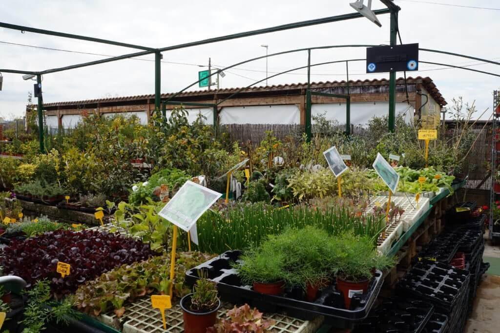 reducir contaminacion electromagnetica germina 6 VEEMA Vegetal System