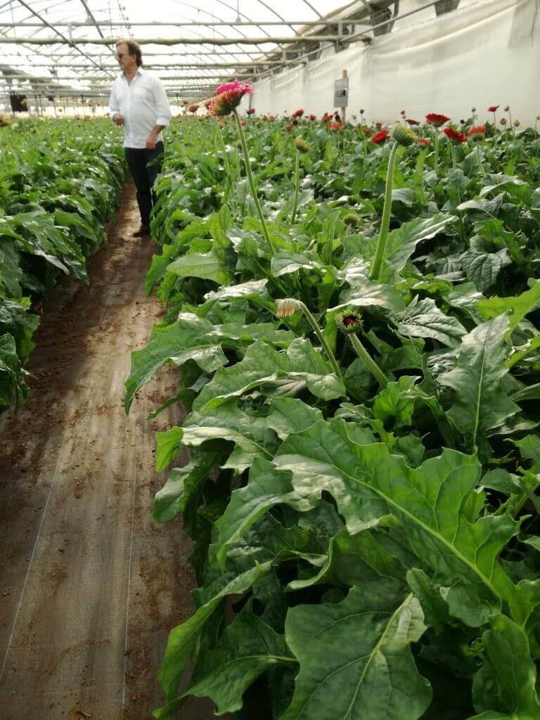 reducir contaminacion electromagnética flores VEEMA