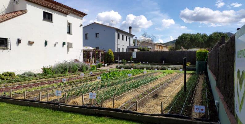 VEEMA hort vegetal contaminacio electromagnetica reduir