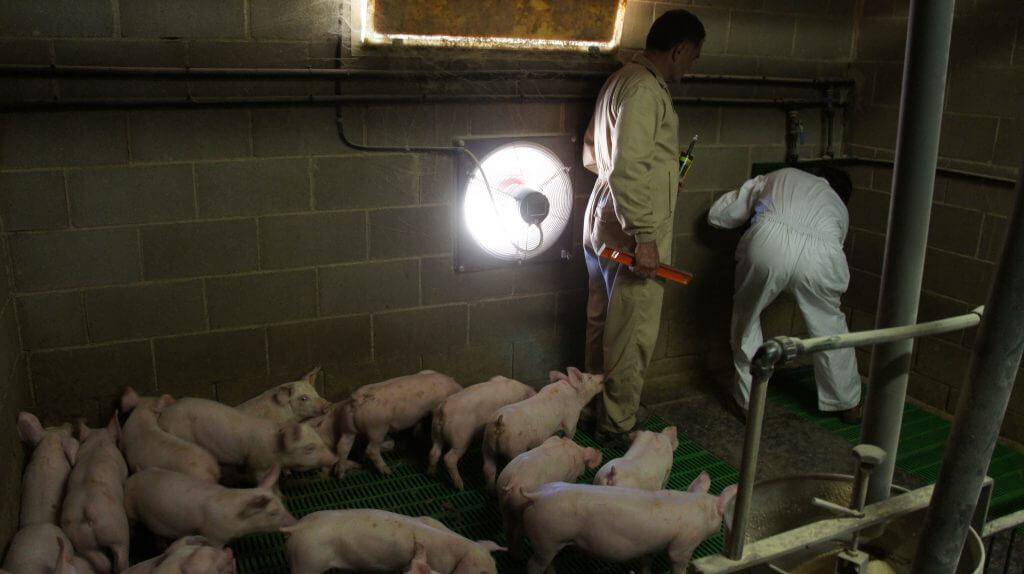 reducir contaminacion electromagnetica cabales 2 VEEMA Animal System