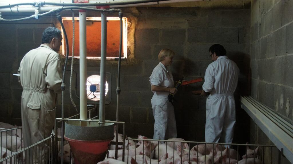 reducir contaminacion electromagnetica cabales 6 VEEMA Animal System